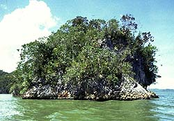 Island in Los Haitises National Park